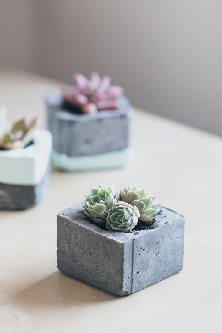 Trendy ideas for diy home diy concrete succulent for Trendy home decorations