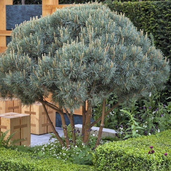 Molded pine