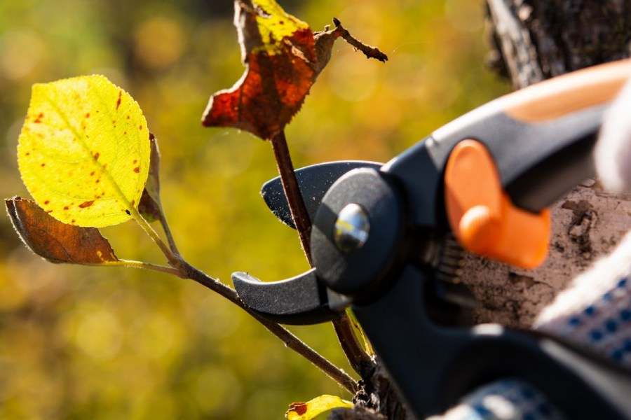 pruning trees in autumn