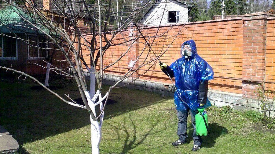 spraying trees from pests
