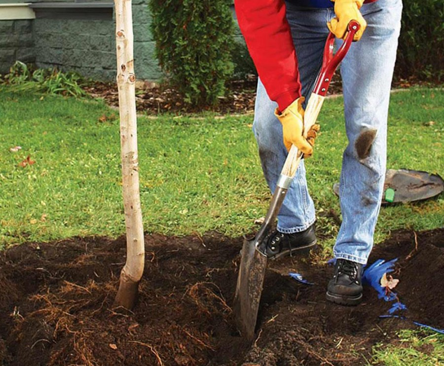 preparation of a hole for planting shrubs