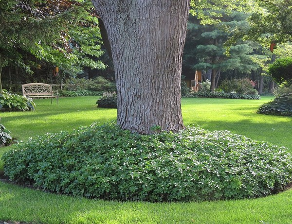 How to save yourself from weeding