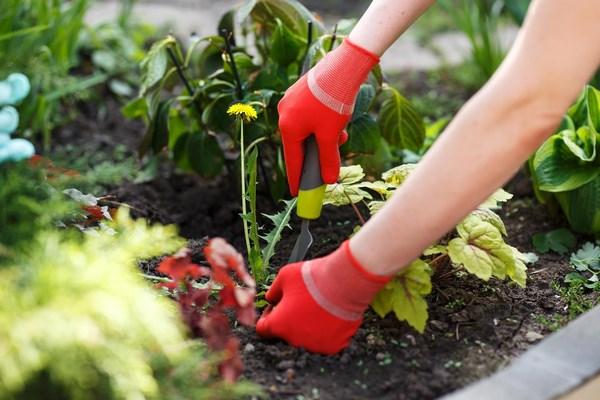Weeding flower beds