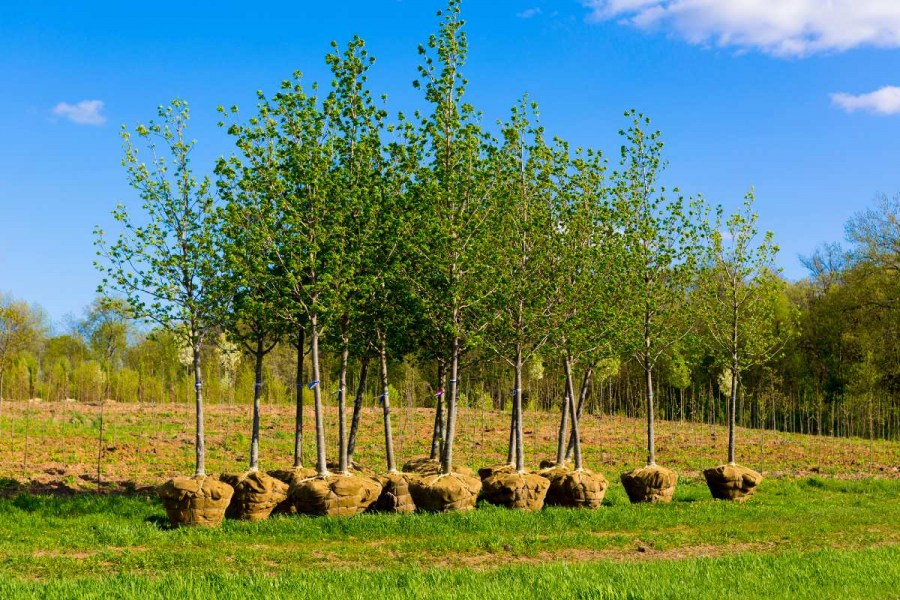 how to plant trees in autumn
