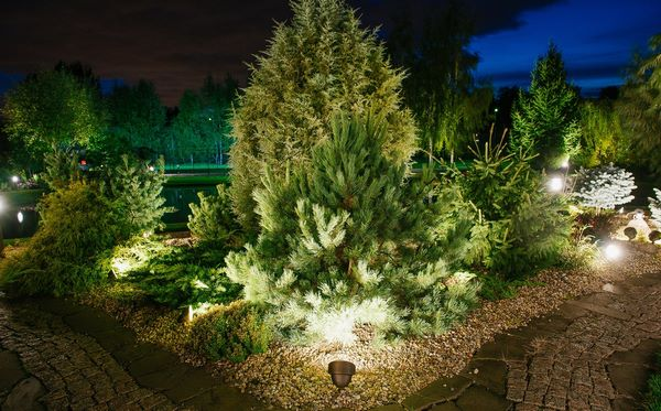 Illumination of a flower bed with conifers