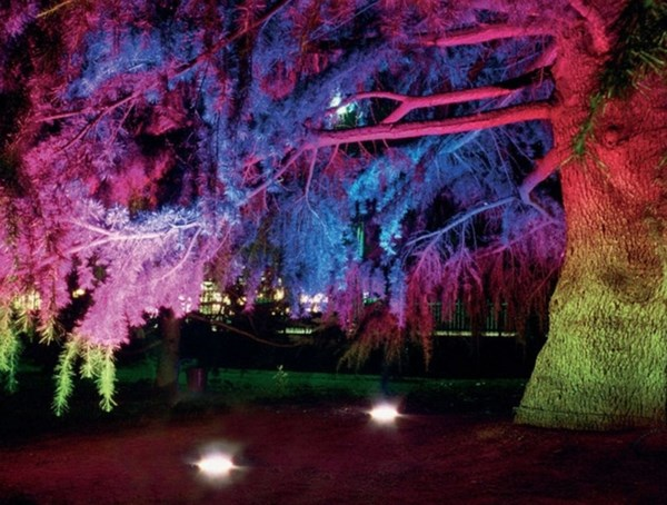 Illumination of a tree with colored lights