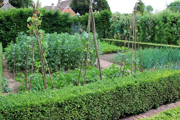 Vegetable garden separated by hedges