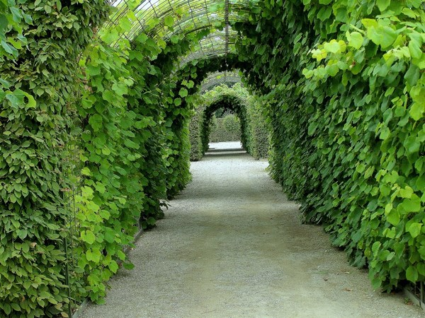 Arch - as a kind of hedge