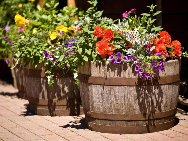 Wooden planters for plants