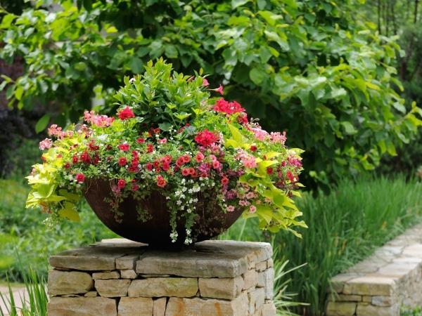 Mini-flower bed in a flowerpot
