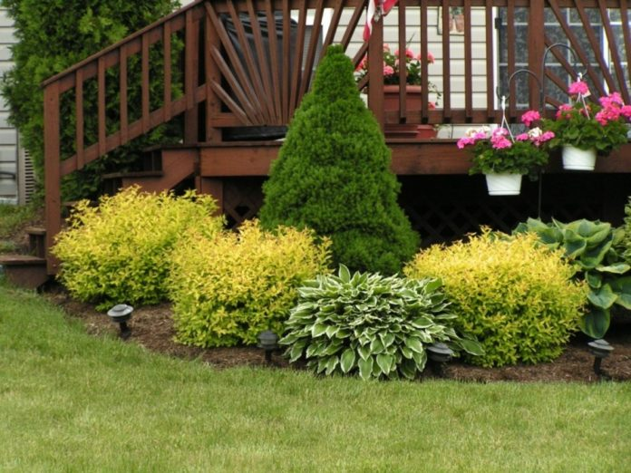 how to plant shrubs