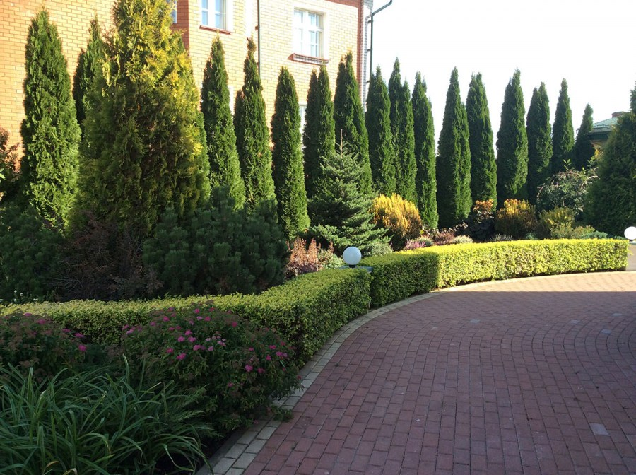 planting ornamental shrubs in autumn