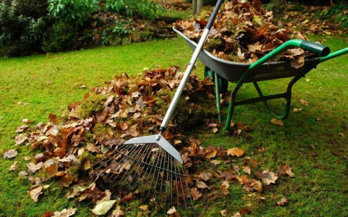 How to do general cleaning in the garden?