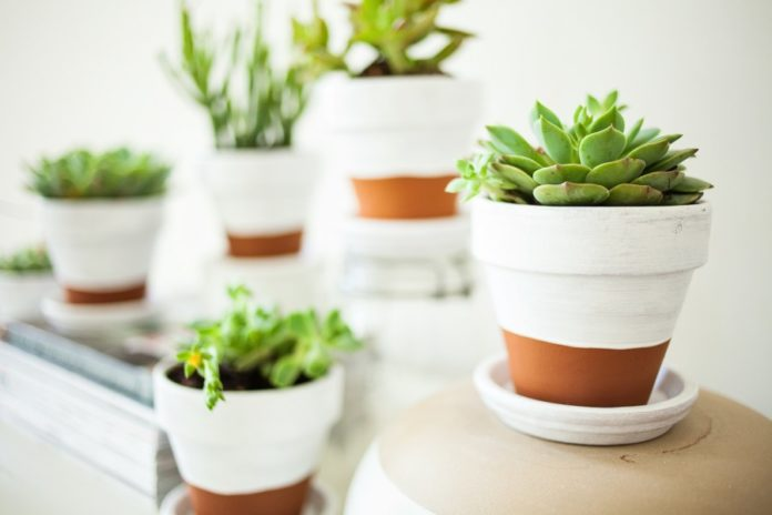 Capsho and flower pots