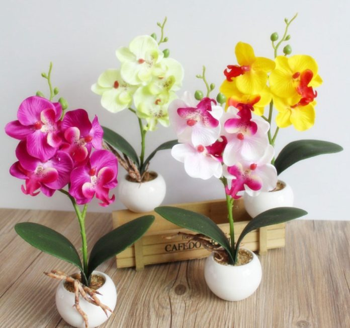 popular types of orchids, their names and photos, description and maintenance at home